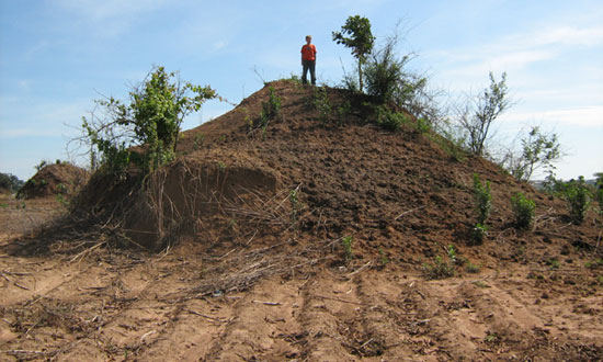 African Ant Hill