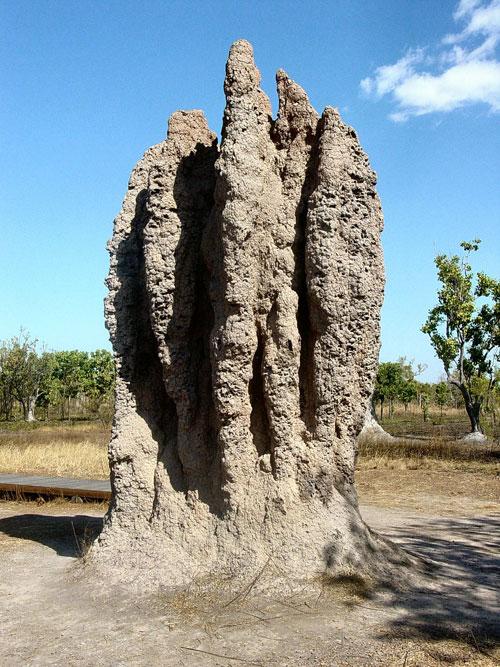 Australia Termite Mound