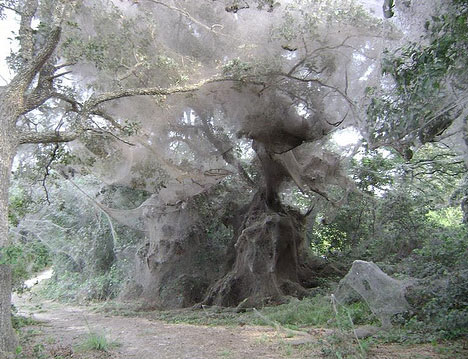 World's Largest Spider Web