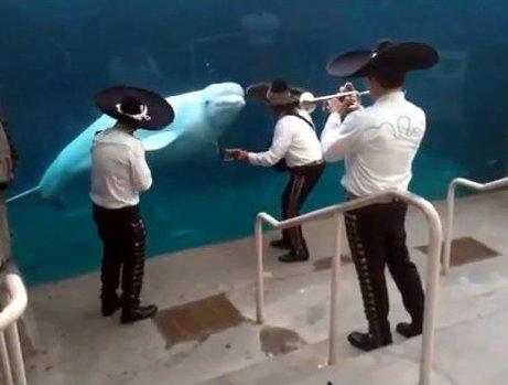 Mariachi Band Serenades Whale