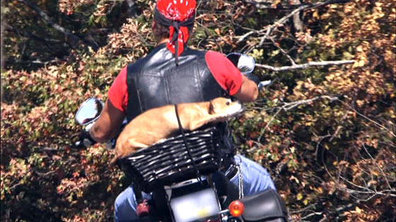Stuffed Dog On Back of Motorcycle