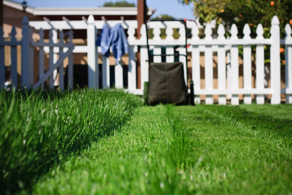 A low maintenance backyard is within your grasp ... photo by CC user seanhobson on Flickr