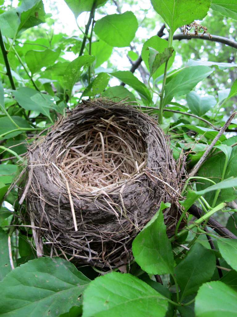 Wondering what to think about financially when the nest empties? This post has some helpful suggestions...